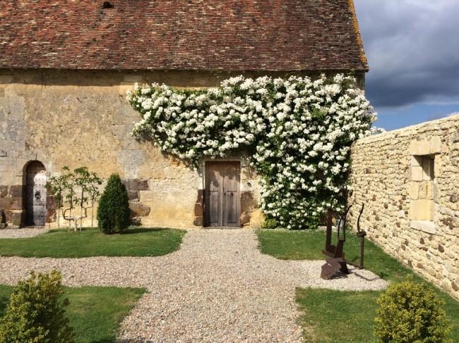 Плетистые белые розы смотрятся очень красиво в старинных стилях оформления экстерьера