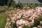 Фото 14 Роскошные кустовые розы: 50 изысканных садов с королевским ландшафтом (фото)