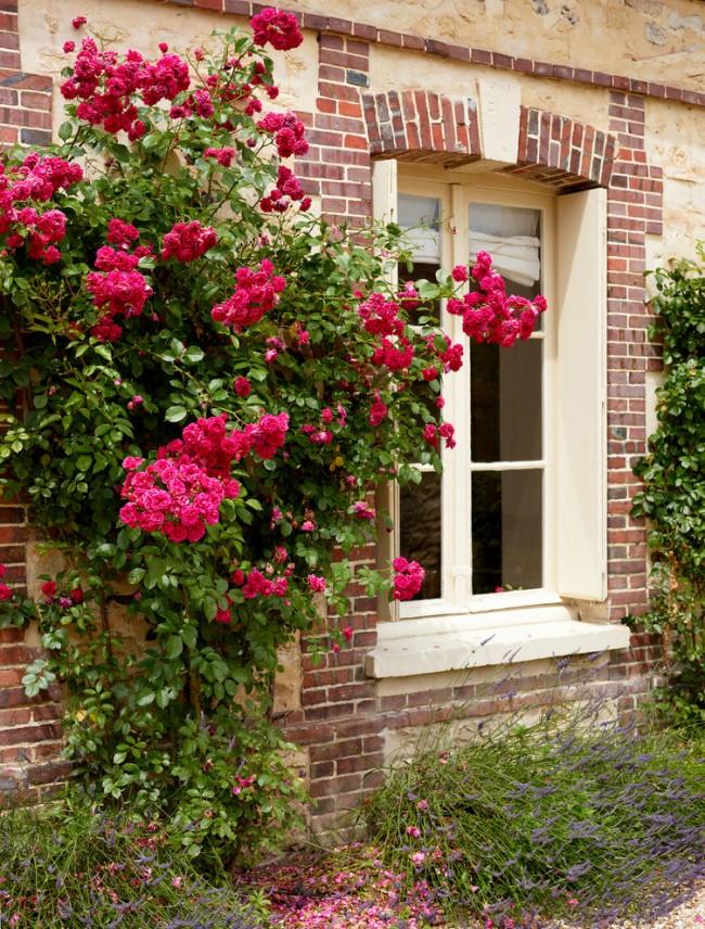 Роза с достоинством послужит украшением вашего сада