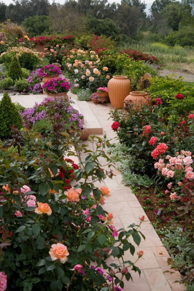 Эти розы отличаются изысканным видом, а уход за ними при этом не считается слишком сложным или специфическим