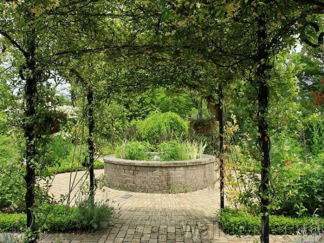 Ажурная листва помогает сохранять прохладу в летний зной