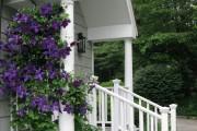 Фото 4 Вьющиеся растения для сада: 65 идей, как сделать дизайн своего участка неповторимым (фото)