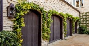 Вьющиеся растения для сада: 65 идей, как сделать дизайн своего участка неповторимым (фото) фото