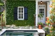 Фото 6 Вьющиеся растения для сада: 65 идей, как сделать дизайн своего участка неповторимым (фото)