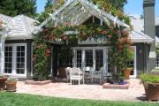 Фото 14 Вьющиеся растения для сада: 65 идей, как сделать дизайн своего участка неповторимым (фото)