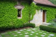 Фото 34 Вьющиеся растения для сада: 65 идей, как сделать дизайн своего участка неповторимым (фото)