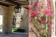 Фото 21 Вьющиеся растения для сада: 65 идей, как сделать дизайн своего участка неповторимым (фото)