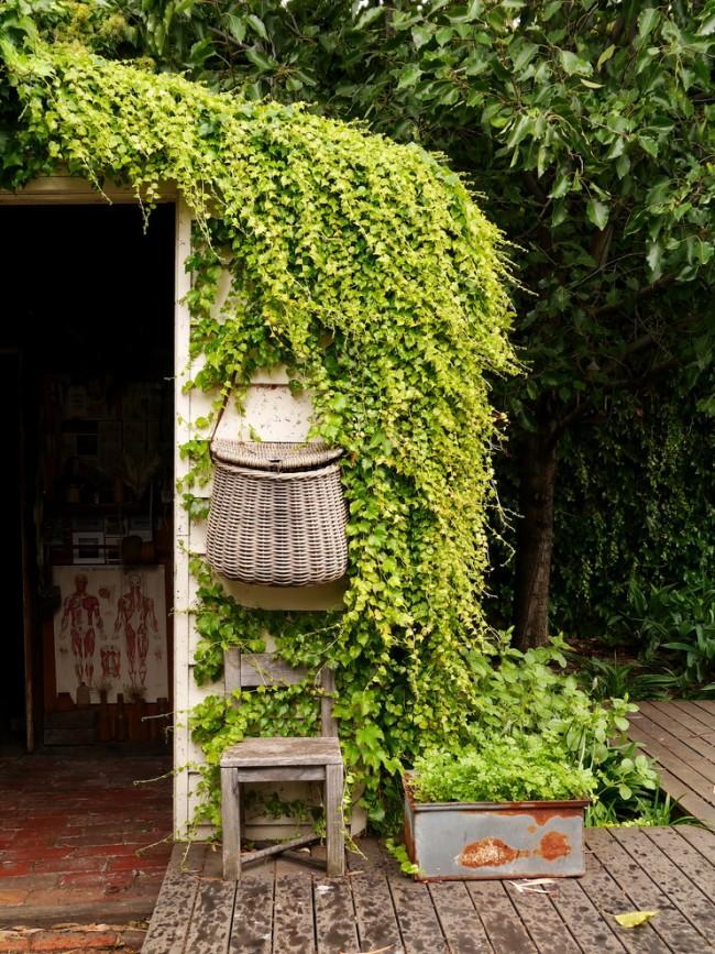Свисающие лианы - вариант для маскирующего неприглядные места хозпостроек оплетения