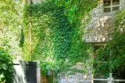 Фото 28 Вьющиеся растения для сада: 65 идей, как сделать дизайн своего участка неповторимым (фото)
