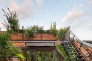 Фото 5 Вьющиеся растения для сада: 65 идей, как сделать дизайн своего участка неповторимым (фото)