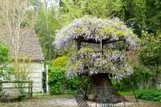 Фото 1 Вьющиеся растения для сада: 65 идей, как сделать дизайн своего участка неповторимым (фото)