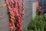Фото 30 Вьющиеся растения для сада: 65 идей, как сделать дизайн своего участка неповторимым (фото)