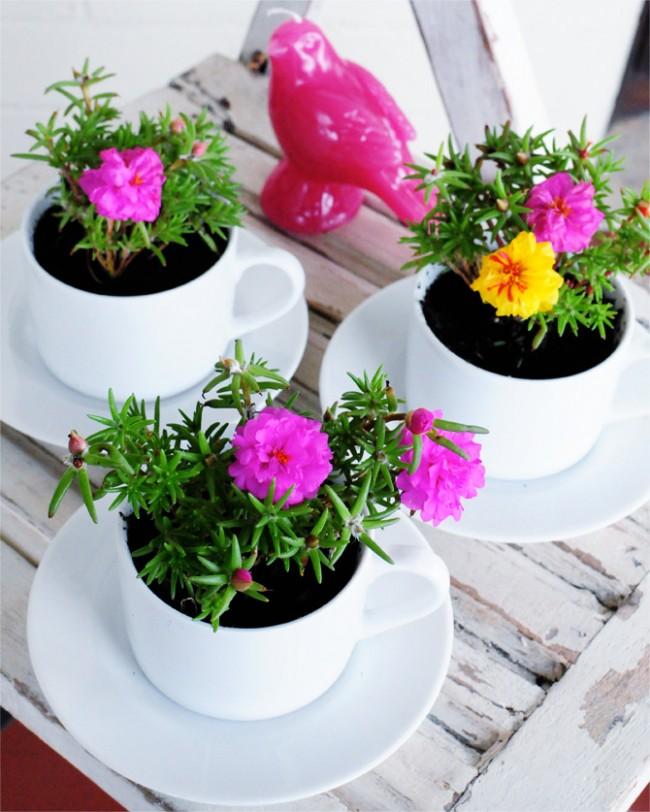 Яркие небольшие цветы высажены в белый сервиз из чашек и блюдцев