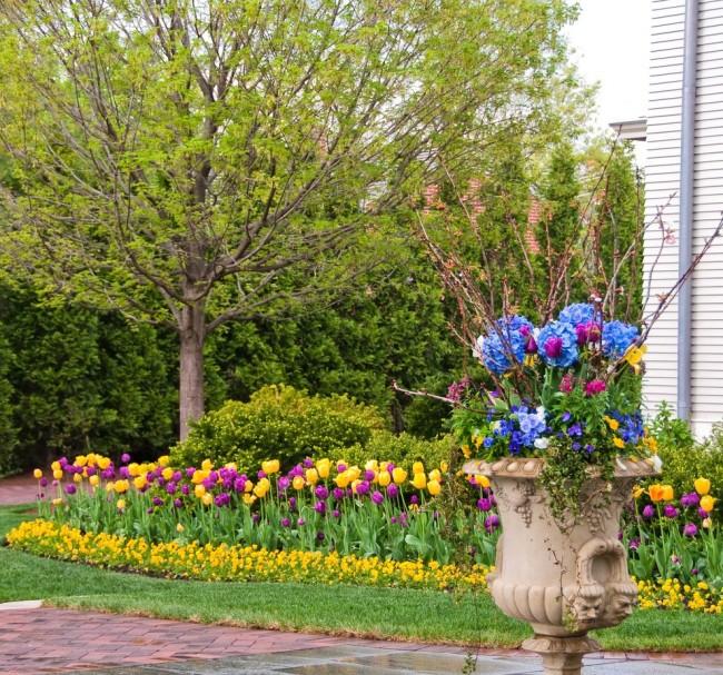 Весенняя клумба из разноцветных тюльпанов