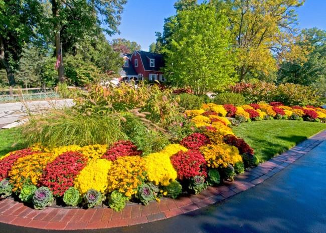 Для больших упорядоченных клумб подбираются растения, которые цветут продолжительно и одновременно