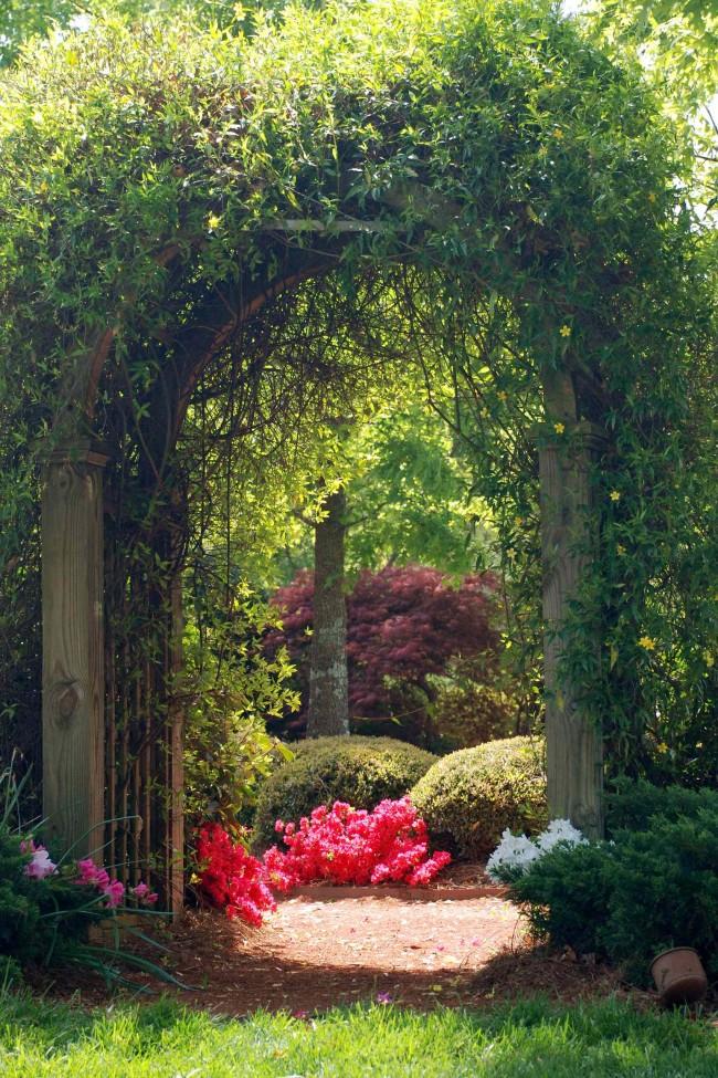 Интересный и загадочный вход в парк: арка из плетущегося растения