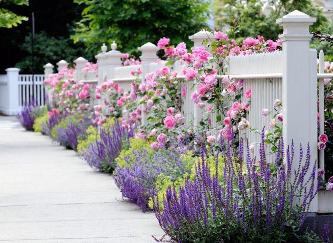 Шикарное сочетание лаванды и розы отлично впишется в ландшафтный дизайн французского стиля