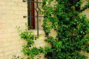 Фото 5 Решетки на окна для дачи: выбор оптимальной конструкции и 70 наиболее элегантных и безопасных вариантов