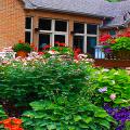 Хоста в ландшафтном дизайне: особенности ухода и 80 гармоничных композиций для сада фото