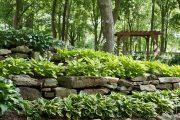 Фото 5 Хоста в ландшафтном дизайне: особенности ухода и 80 гармоничных композиций для сада