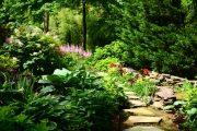 Фото 11 Хоста в ландшафтном дизайне: особенности ухода и 80 гармоничных композиций для сада