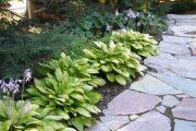 Фото 15 Хоста в ландшафтном дизайне: особенности ухода и 80 гармоничных композиций для сада