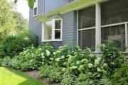 Фото 25 Хоста в ландшафтном дизайне: особенности ухода и 80 гармоничных композиций для сада