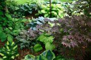 Фото 3 Хоста в ландшафтном дизайне: особенности ухода и 80 гармоничных композиций для сада