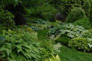 Фото 38 Хоста в ландшафтном дизайне: особенности ухода и 80 гармоничных композиций для сада