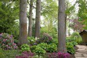 Фото 43 Хоста в ландшафтном дизайне: особенности ухода и 80 гармоничных композиций для сада
