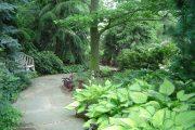 Фото 50 Хоста в ландшафтном дизайне: особенности ухода и 80 гармоничных композиций для сада