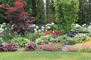 Фото 53 Хоста в ландшафтном дизайне: особенности ухода и 80 гармоничных композиций для сада