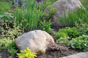 Фото 60 Хоста в ландшафтном дизайне: особенности ухода и 80 гармоничных композиций для сада