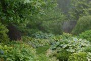 Фото 64 Хоста в ландшафтном дизайне: особенности ухода и 80 гармоничных композиций для сада