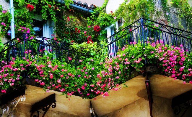 """Создать свой неповторимый стиль вашему балкону помогут цветы, они сделают его ярче, уютнее, а также помогут создать """"островок"""" природы в шумном мегаполисе"""