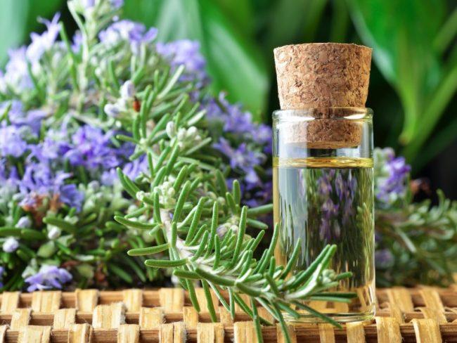 В розмарине содержатся эфирные масла, которые обладают лечебной силой