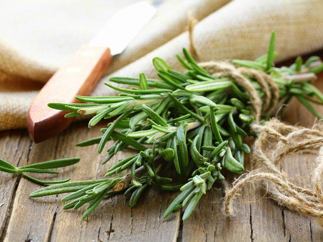 Розмарин - многолетнее вечнозеленое растение с характерным запахом