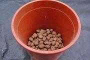 Фото 26 Средиземноморские ароматы круглый год: выращивание розмарина в квартире и его применение