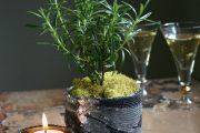 Фото 10 Средиземноморские ароматы круглый год: выращивание розмарина в квартире и его применение
