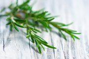 Фото 36 Средиземноморские ароматы круглый год: выращивание розмарина в квартире и его применение