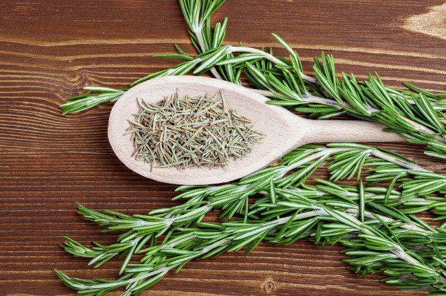розмарин: выращивание в квартире - сушенный розмарин имеет прекрасные вкусовые и лечебные свойства