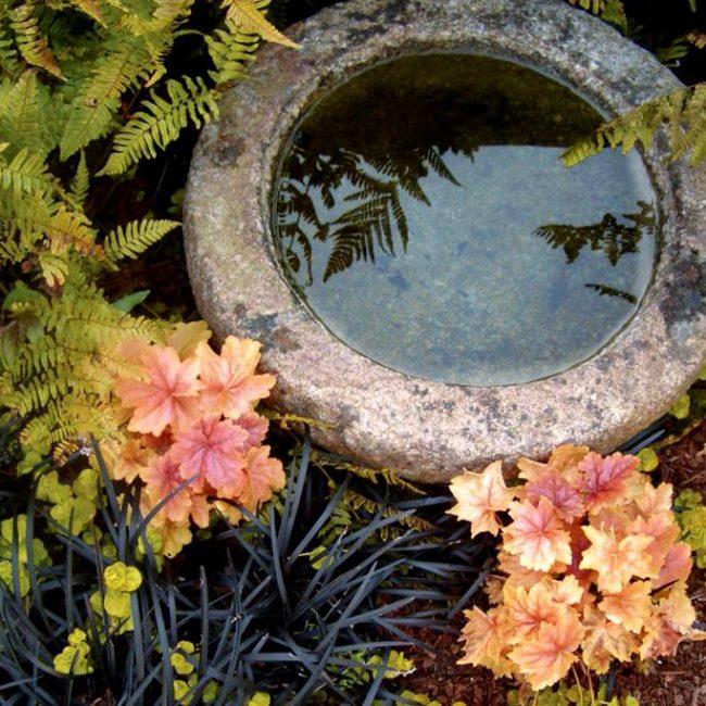 Гейхера отлично сочетается с другими растениями. Это даст вам возможность создавать завораживающие глаз композиции