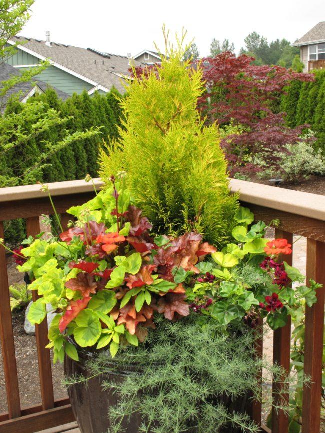 Гейхеры, как правило, высаживают на клумбах или во дворах частных домов, но молодые саженцы этого растения можно оформить в красивую композицию в декоративном вазоне