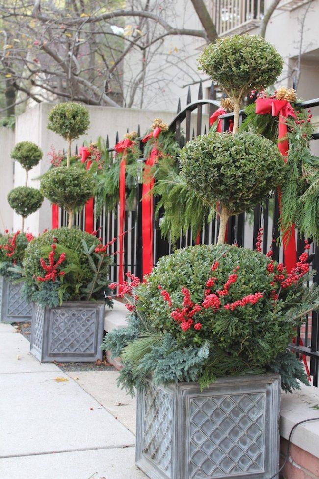 Остролист и красные банты придадут яркости вашему саду