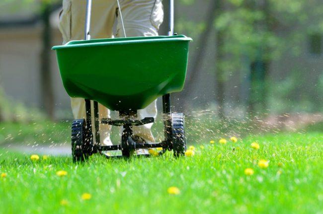 Разбрасыватель удобрений упростит процесс подкормки газона