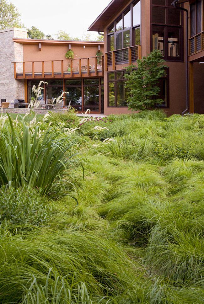 Пушистый необычный газон из лугового мятлика