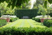 Фото 8 Газонная трава, которая уничтожает сорняки: простое решение для идеального сада