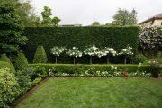 Фото 21 Газонная трава, которая уничтожает сорняки: простое решение для идеального сада