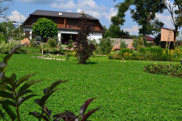 Оригинальный и красивый газон из микроклевера