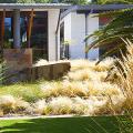 Газонная трава, которая уничтожает сорняки: простое решение для идеального сада фото